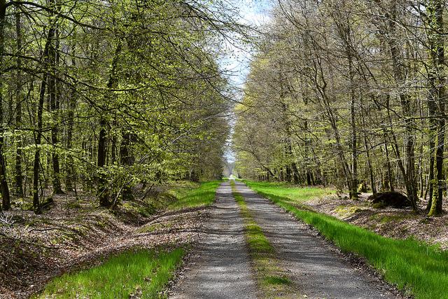 Villecartier Forest, Brittany   www.rachelphipps.com @rachelphipps