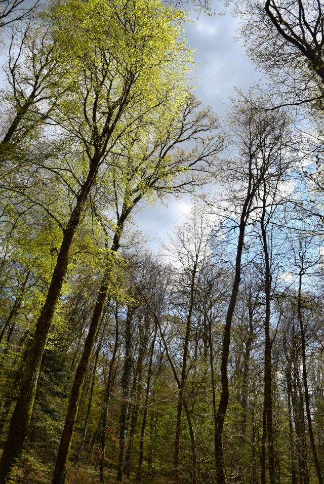 Walking in the forest, Brittany   www.rachelphipps.com @rachelphipps