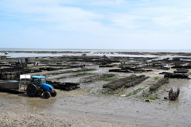 View of the Oyster Beds, Brittany | www.rachelphipps.com @rachelphipps