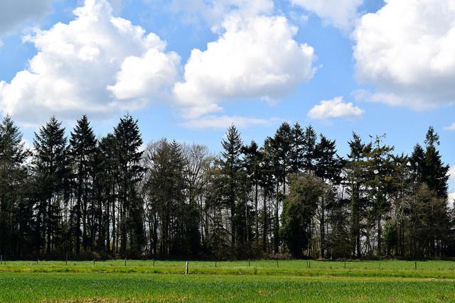 Edge of the Forest in Brittany, France   www.rachelphipps.com @rachelphipps