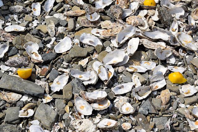Oyster Shells in Cancale, Brittany | www.rachelphipps.com @rachelphipps