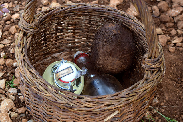 Hunting for truffles in the Dordogne Valley | www.rachelphipps.com @rachelphipps