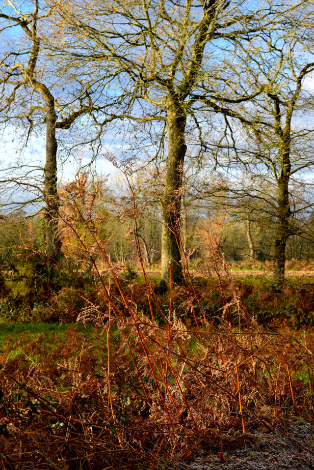 Winter Walks in Brittany, France #france #brittany