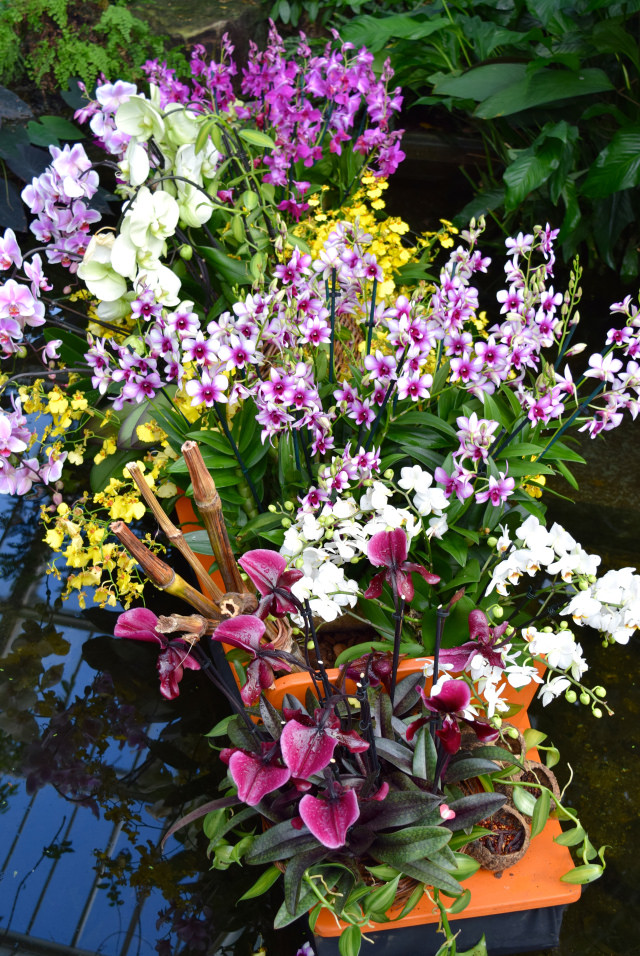 Orchid Boat at the Kew Gardens Orchid Festival 2018 #orchids #kewgardens #london
