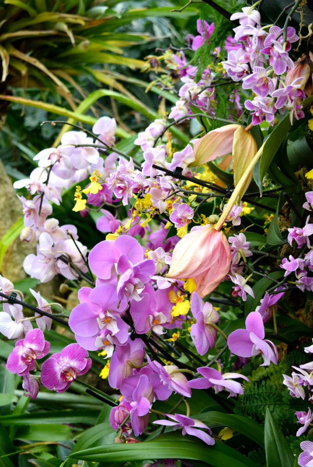 Delicate Orchids at the Kew Gardens Orchid Festival 2018 #orchids #kewgardens #london