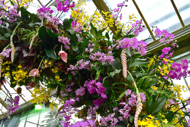 Pink & Yellow Orchid Arches at the Kew Gardens Orchid Festival 2018 #orchids #kewgardens #london