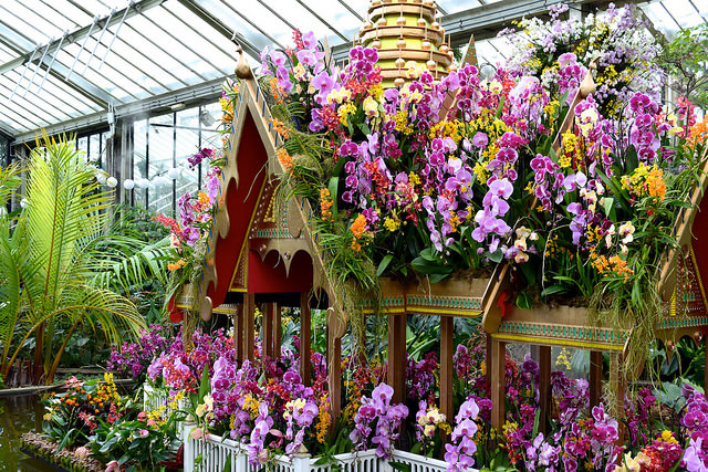 Orchid Festival Boat at the Kew Gardens Orchid Festival 2018 #orchids #kewgardens #london