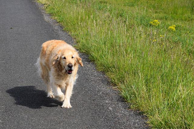 Gally the Dog at Manoir de Malagorse, France #dog #travel #france