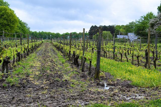 Domaine des Huards, Loire Valley #loire #france #wine #winetasting #travel
