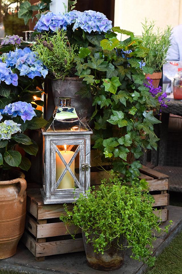 Hydrangeas at The Royal Horseguards Hotel's Secret Herb Garden #hydrangeas #gingarden #pubgarden #hotel #london