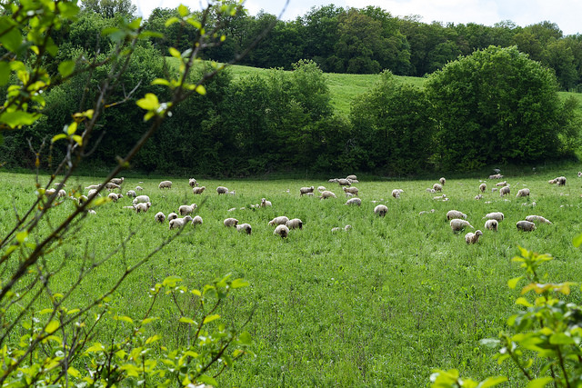 Open Fields at Manoir de Malagorse, France #travel #france
