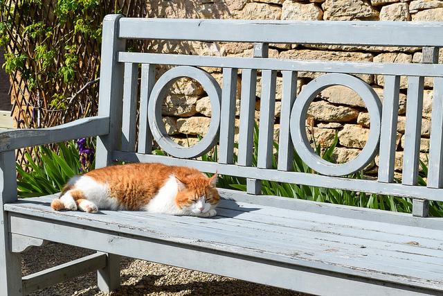 Caramel the Cat at Manoir de Malagorse, France #cat #hotel #travel #france