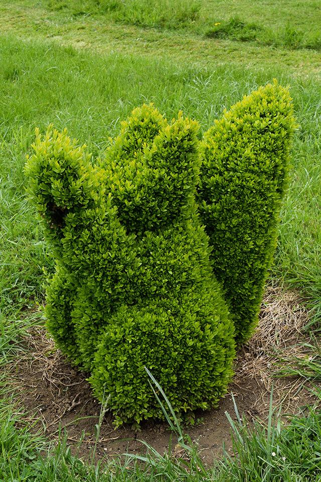 Topary Squirrel at the Jardins de Eyrugnac #gardens #eyrugnac #dordogne #france #travel